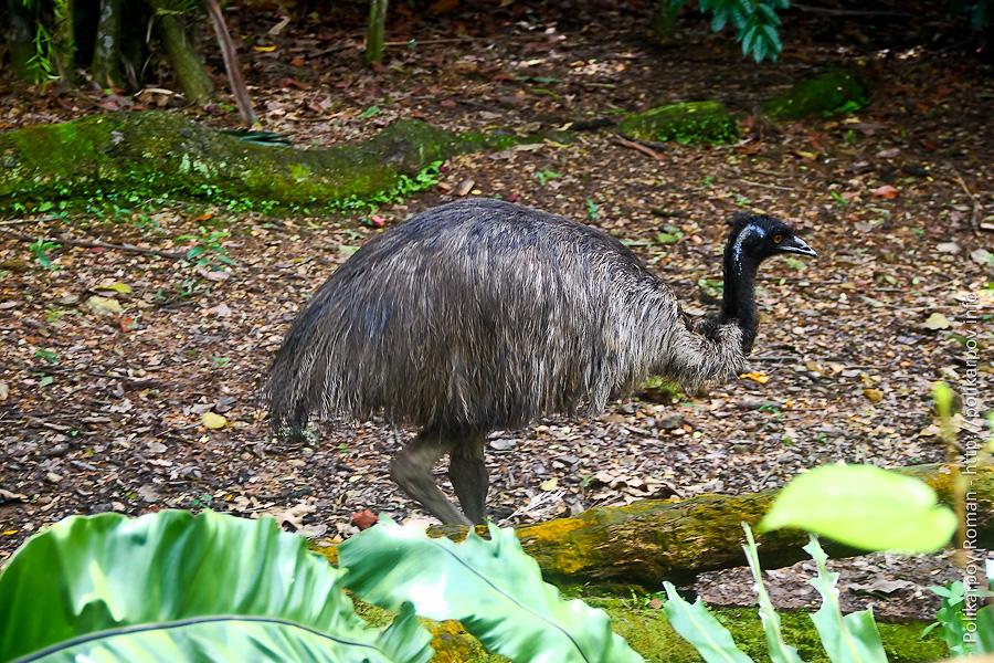 0 c4fc3 4bb31b1f orig Парк птиц Jurong в Сингапуре