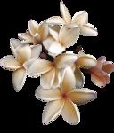 orchide1_emma_180309.png