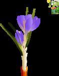 Flowers1 [преобразованный]