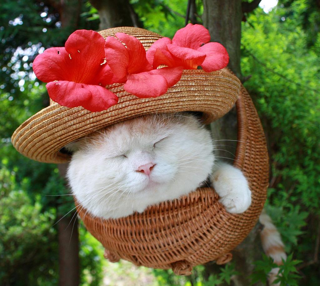 этого скандала красивые фото кошек в шляпе скоро маленькие
