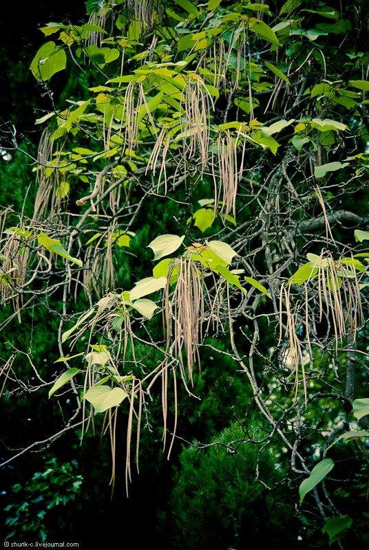 Дерево в Приморском парке
