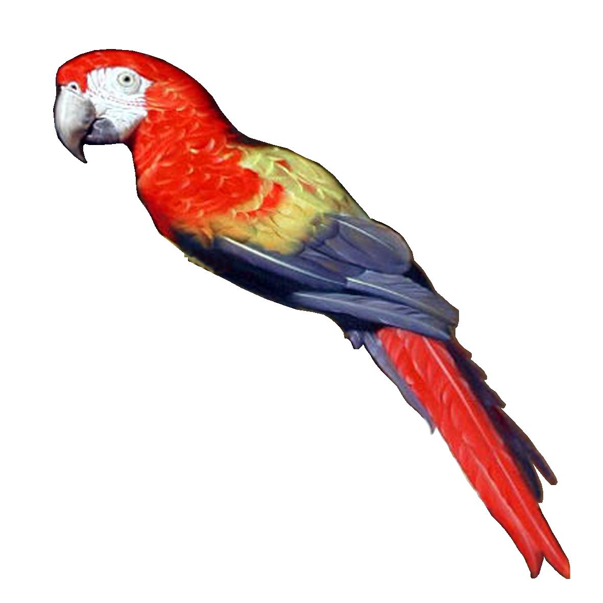 Клипарт попугай, бесплатные фото, обои ...: pictures11.ru/klipart-popugaj.html