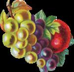 Виноград  0_66347_f15fa12b_S