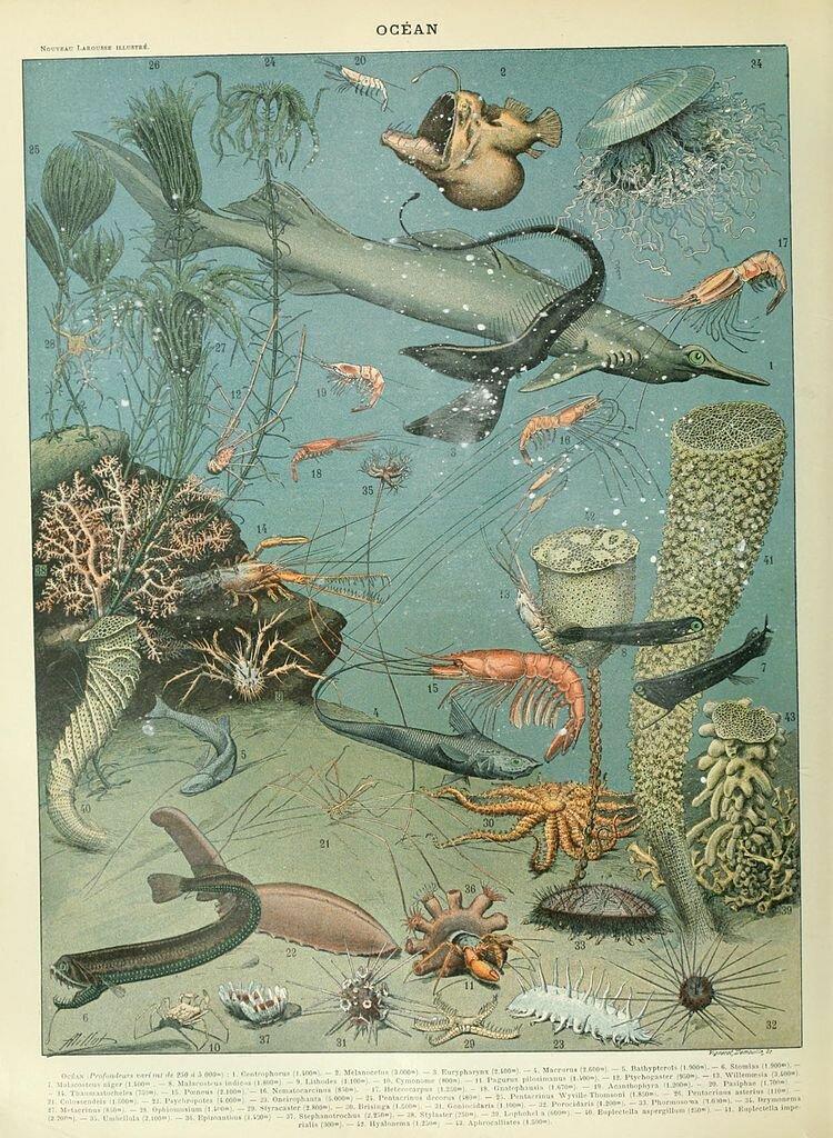 Adolphe Millot (1857–1921) - Ocean.jpg