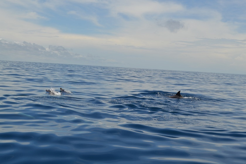 Дельфины у побережья Венесуэлы. Красивые фотографии 0 141a51 6b167d3e orig