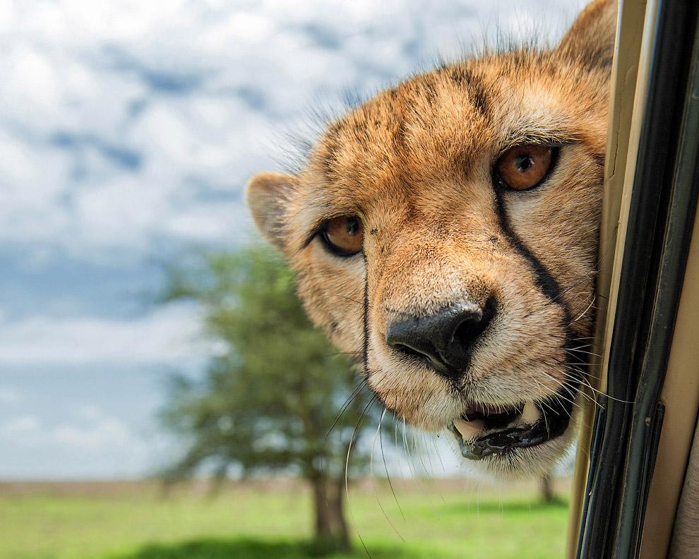 5. «Мастер селфи ». (Фото Megan Lorenz | Comedy Wildlife Photography Awards):