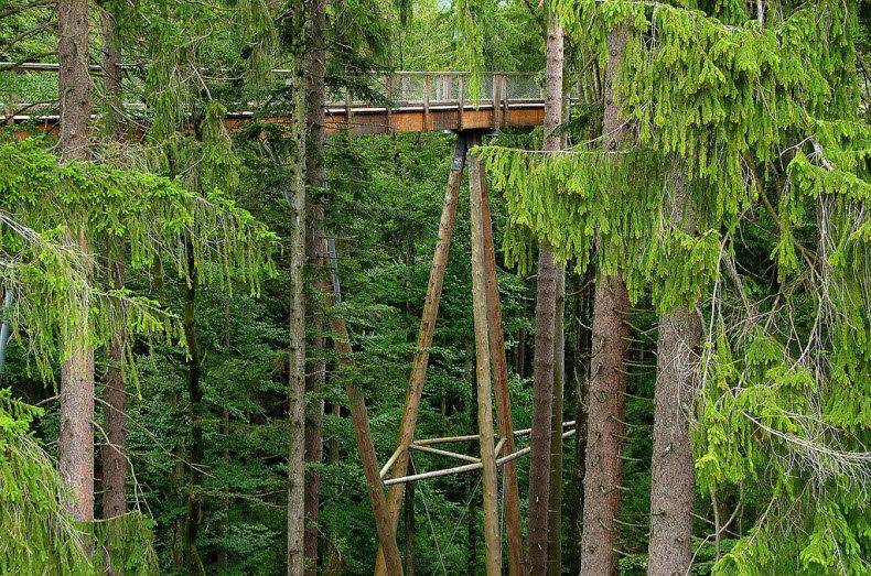 фото прогулка по лесу