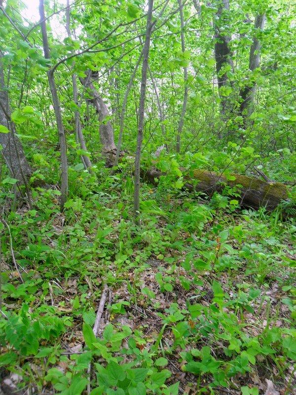 В лесу ... SAM_6690.JPG