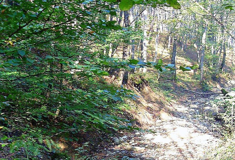 В лесу, под Горячим Ключом, на слёте ... (193).JPG