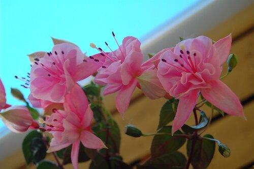 blomster 11