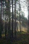 В лесу утром