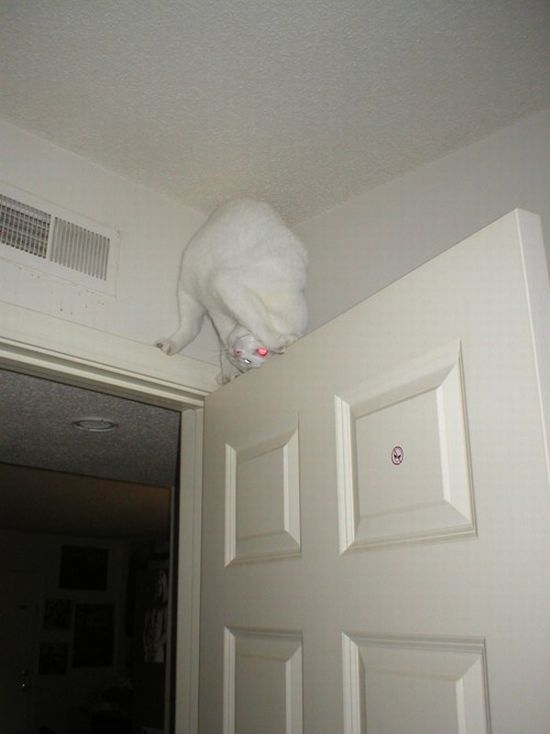 кот придуряется