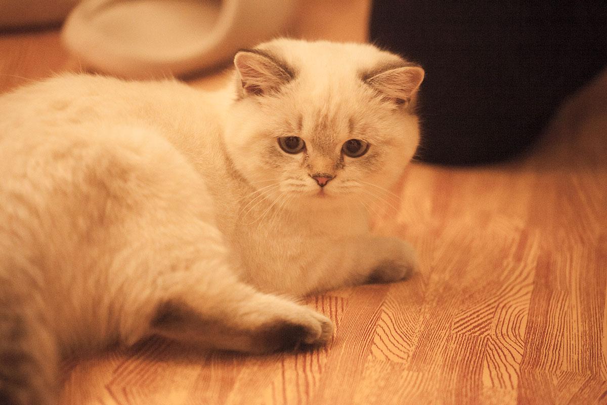 Милый, милый котик
