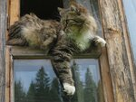 Сидела кошка на окошке