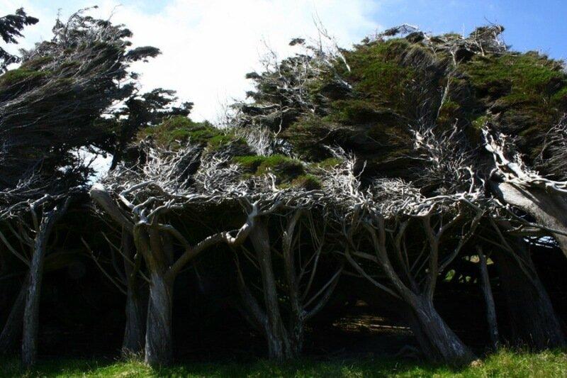 Наклонные леса в Новой Зеландии. Фотографии