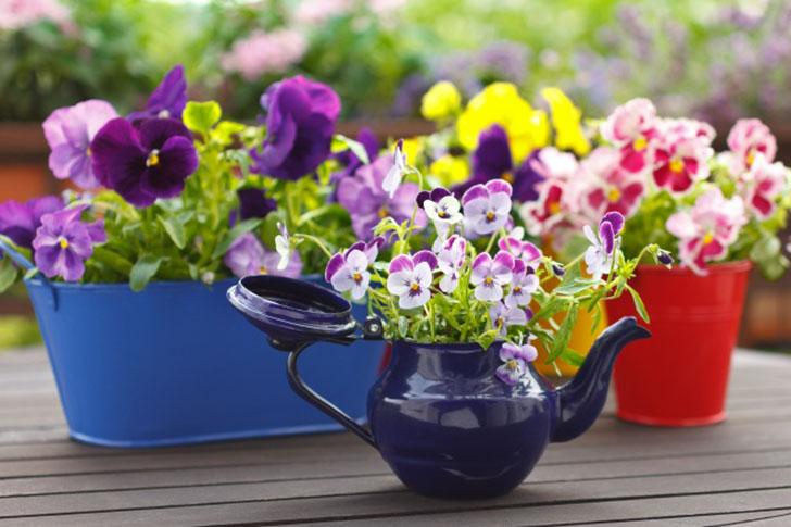 Чайник — не только для чаепитий В доме часто накапливается невообразимое количество чайников разных