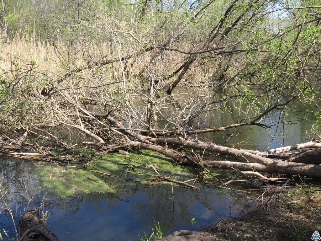 Завал из деревьев в русле
