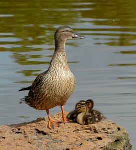 малыши и мамаша