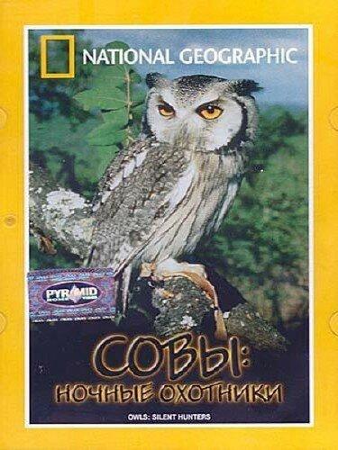 Owls.jpeg