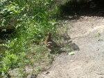 1 июня в преддверии Всемирного дня охраны природы воспитанники воскресной школы Донского храма г. Мытищи и их родители посетили заповедную экологическую тропу на Воробьевых горах в Москве