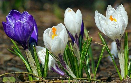 начало весны