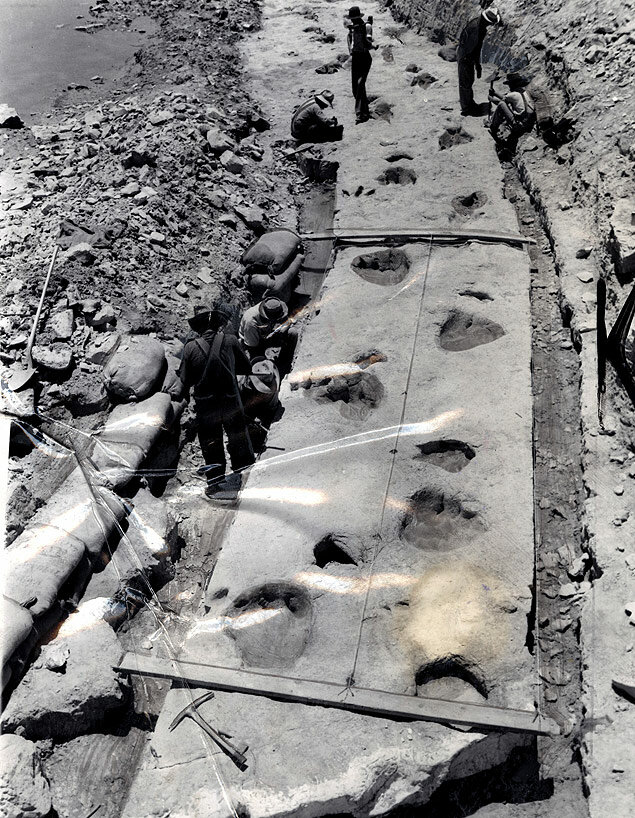 Dinosaur tracks in prehistoric limestone are removed from the bed of the Paluxy River in Texas.jpg