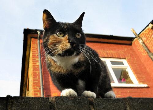 Неофициальный праздник — Всемирный день кошек