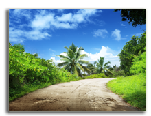 Сейшелы. О. Ла Диг. Road in jungle of La Digue island, Seychelles. Фото Iakov Kalinin - Depositphotos