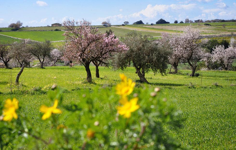Цветущая Сицилия