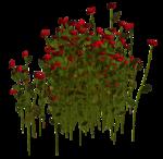 Lug_Grass_Flower (32).png