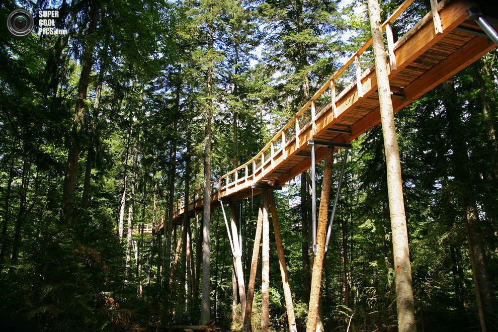 PIC FROM CATERS NEWS - (PICTURED is the tree top walk in the German countryside) - This real-life Ewok-style tree walk is the longest in the world at an incredible 1,300 metres. The 4,265 foot-long structure takes tourists on a journey through the<br />canopy