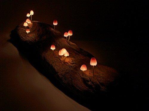 Удивительные грибы - фонарики