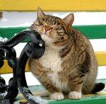 мартовский  кот.jpg