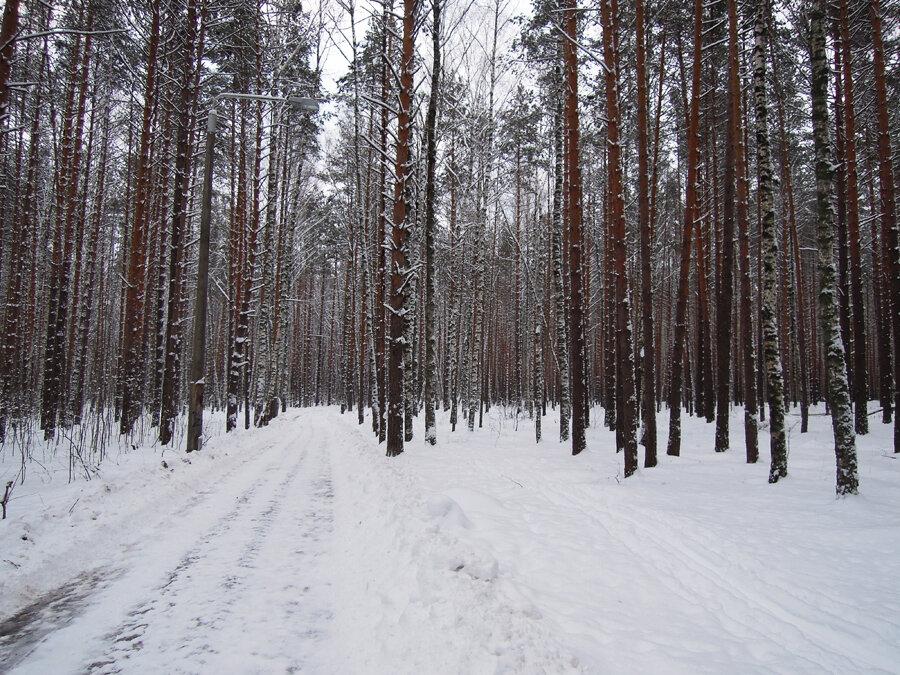 тропа здоровья зимой