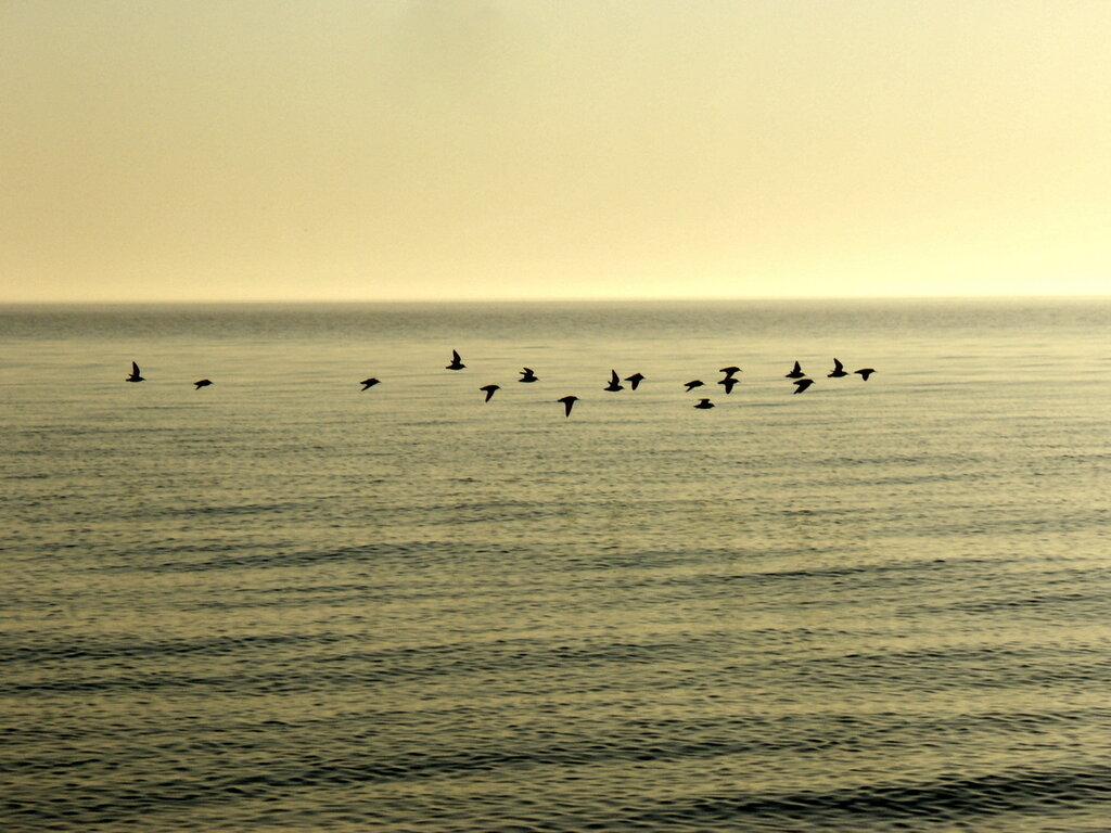 утро..полёт у моря