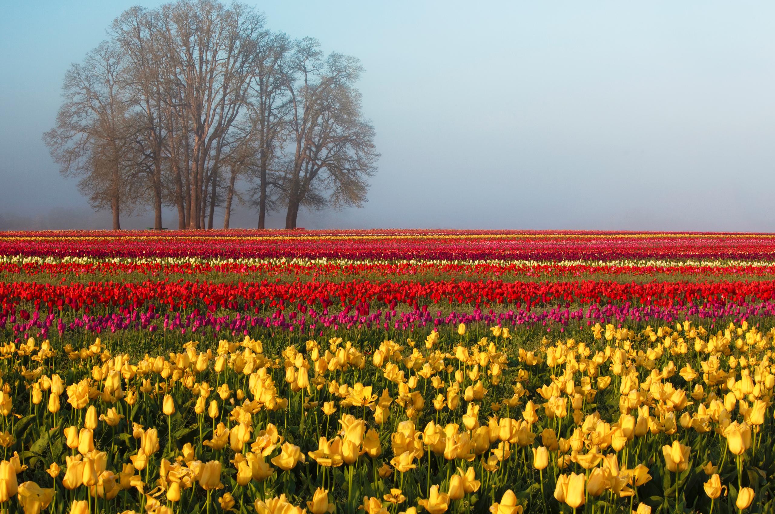 Картинки с изображением весны на рабочий стол