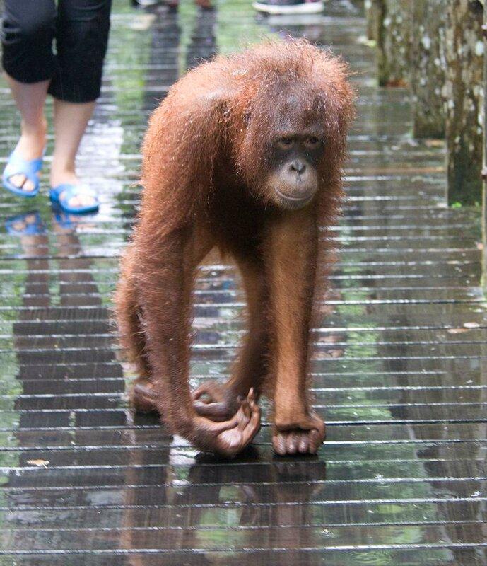 Борнео в феврале 2013