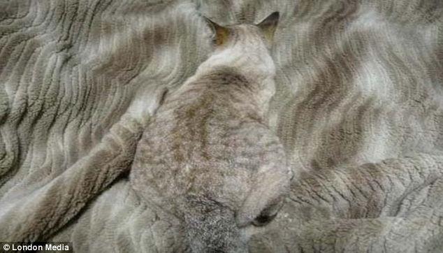 Найди кота