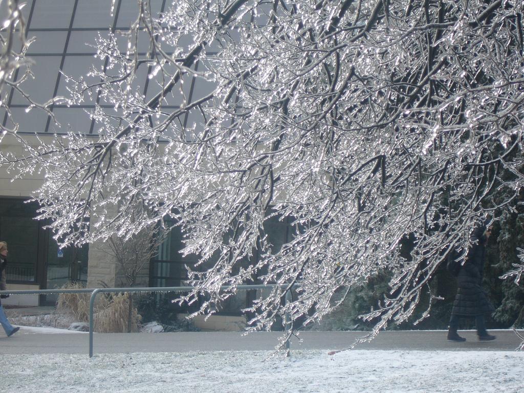 Блоги. Последствия ледяных дождей. которая, вытекает, разбиваются, моментально, замерзает, скульптуры, ледяные, создавая, Капельки, температуре, ледяной, сверху, покрытые, отрицательной, коркой, поверхности, любые, попадании, источник
