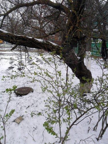 Зимние фокусы марта. 2013-03-25