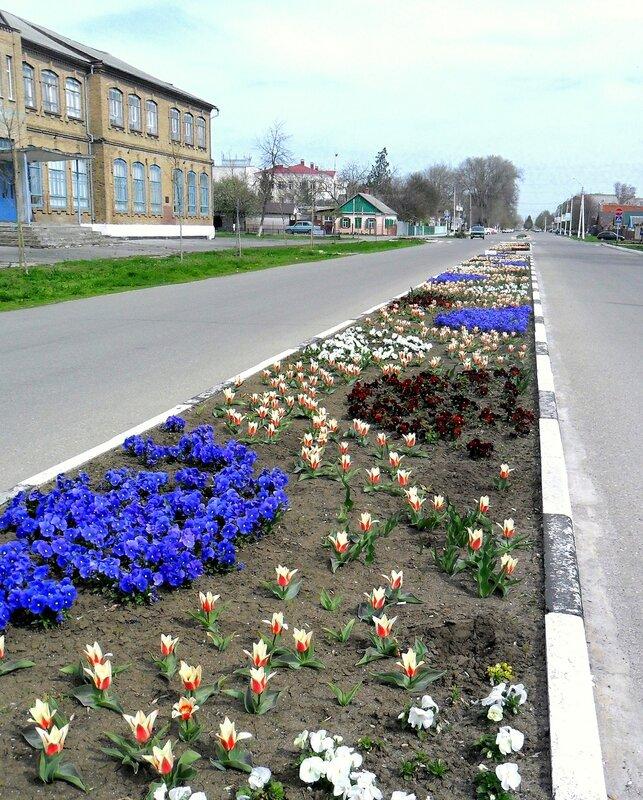 Апрельские чудеса цветения...