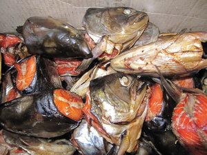 Коммерсант в Приморье лично съел почти 6 тонн лососёвых голов