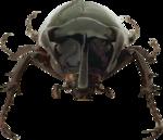 Holliewood_Junkyard_Bug1.png