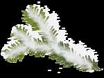 растения в снегу (1).png