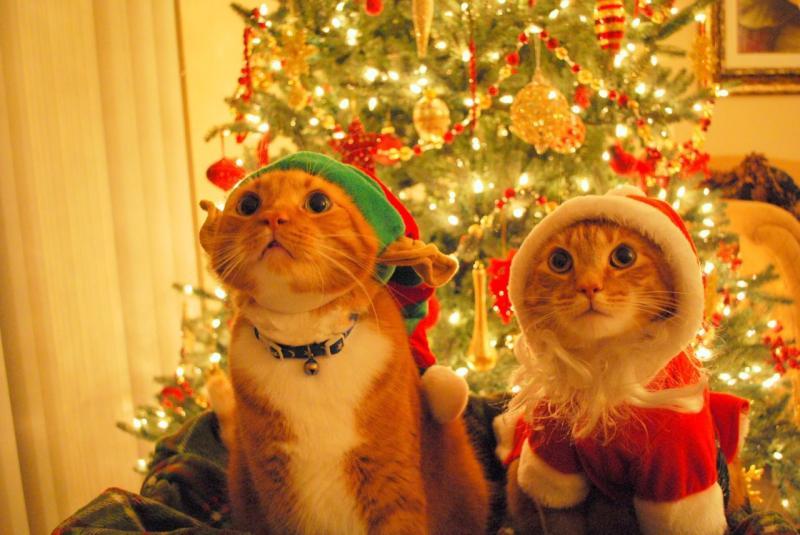 Коты на ёлке - фото 8