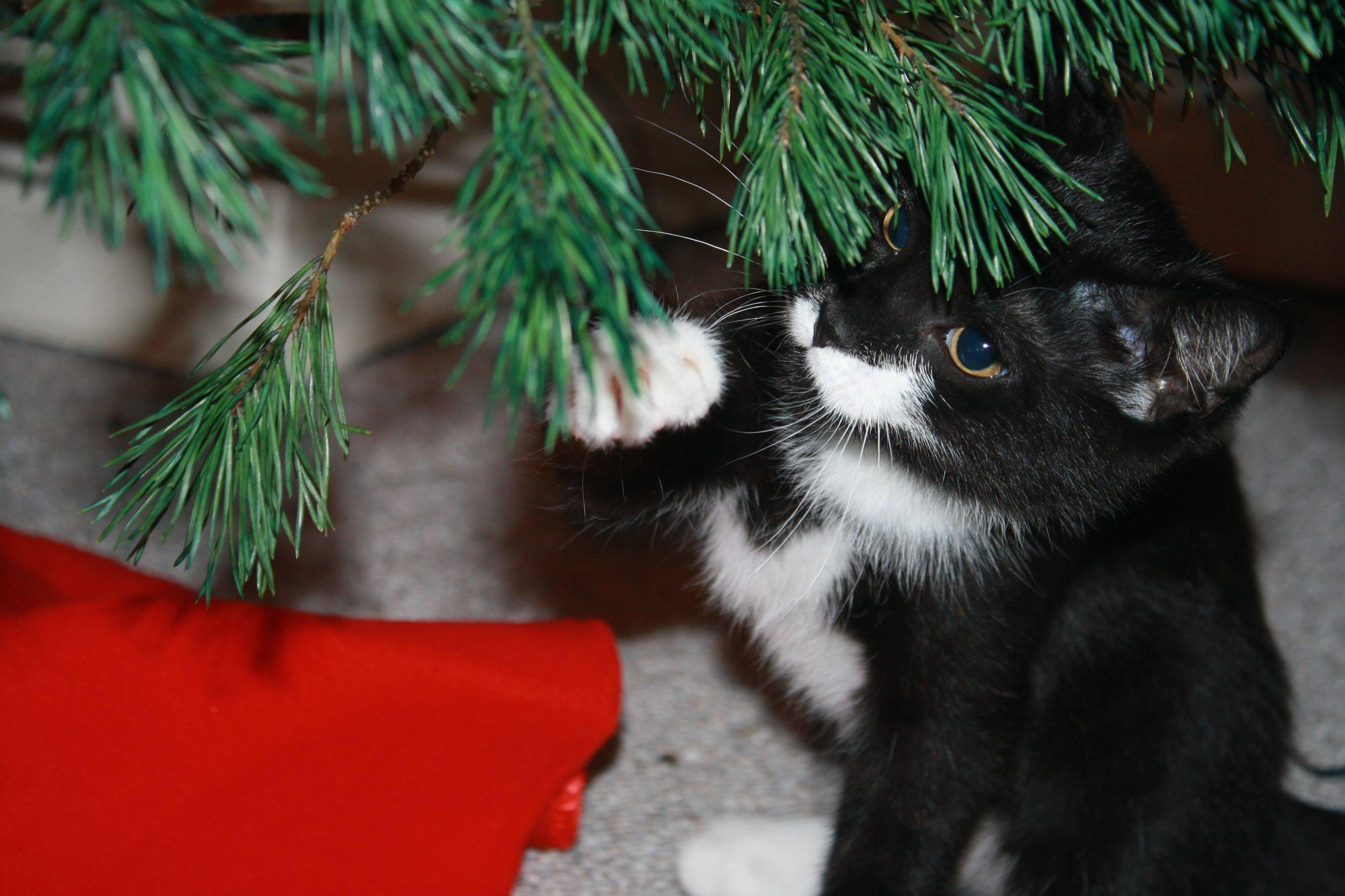Коты на ёлке - фото 10
