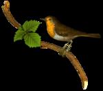nb_vp_bird6.png