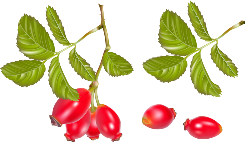 Fruits (3).png