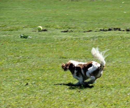 Пёс и мячик