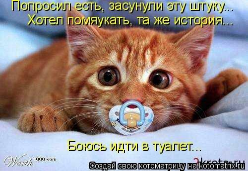 http://img-fotki.yandex.ru/get/5625/194408087.1/0_8e1e4_bdbfd276_L.jpg